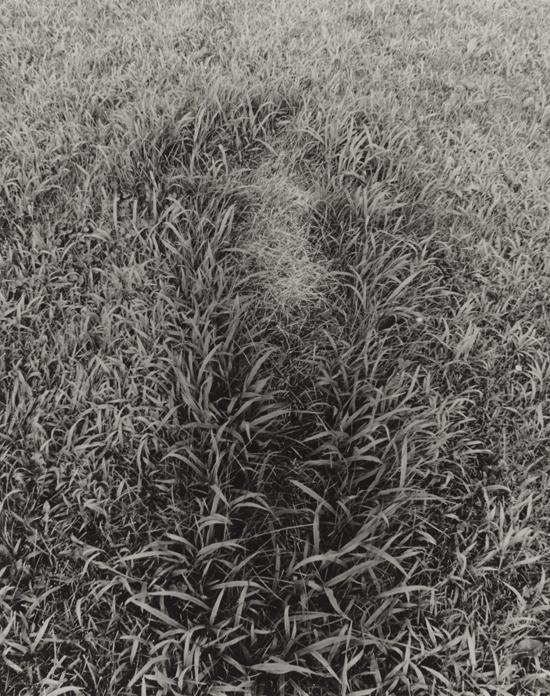 Ana Mendieta, Untitled, from the series Silueta Works in Iowa, 1978