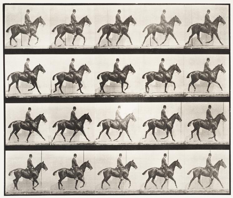 Eadweard Muybridge, Daisy with Rider, 1887