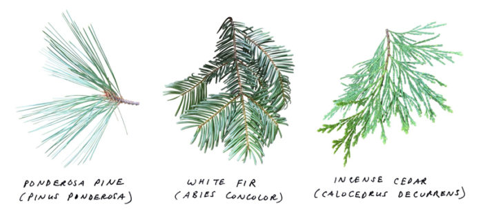 Notes of a Bioregional Interloper