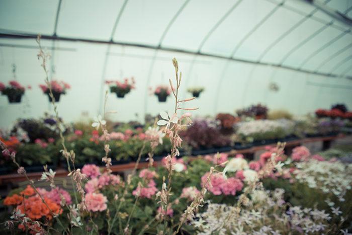 Queer Heterarchies of Flowers