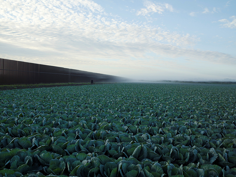 Richard Misrach, Cabbage Crop Near Brownsville, Texas, 2015; © Richard Misrach, courtesy Fraenkel Gallery, San Francisco.