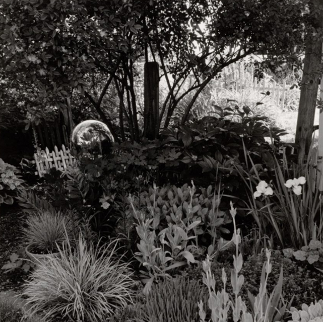 Gregory Conniff, Home Garden, NE Corner, June, 1999-2001