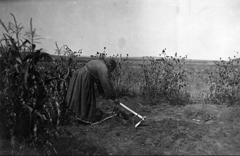 My fourth great grandmother, Owl Woman, preparing land to plant. Source: State Historical Society of North Dakota.