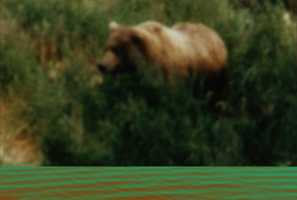 grizzly bear in green scrub with a superimposed stripe of green and red pixellated river along the bottom edge.